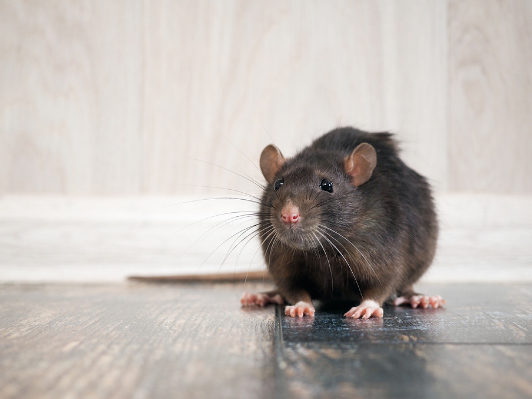 Keep Mice Out of Your Home